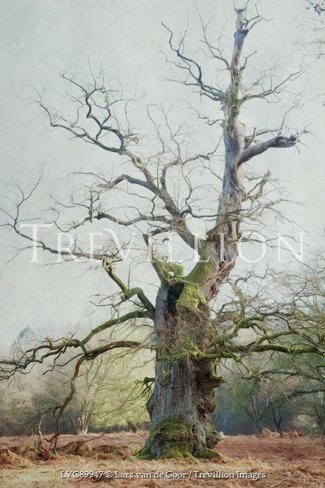 Lars van de Goor SPOOKY TREE IN WINTRY COUNTRYSIDE Trees/Forest