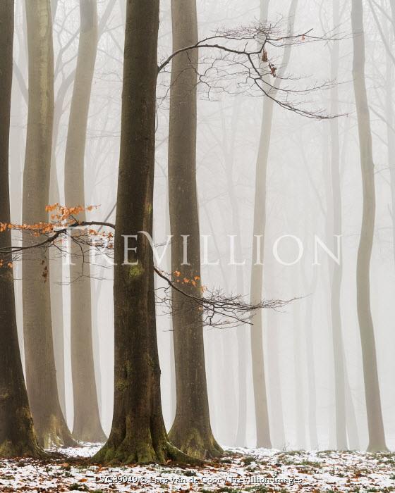 Lars van de Goor TREES IN FOG WITH SNOW Snow/ Ice