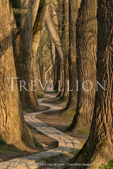 Lars van de Goor EMPTY WINDING PATH IN FOREST Paths/Tracks