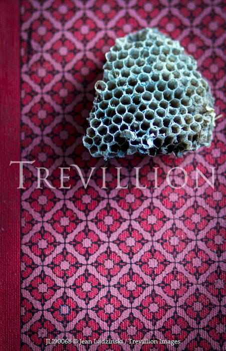 Jean Ladzinski HONEYCOMB ON PINK PATTERED FABRIC Miscellaneous Objects