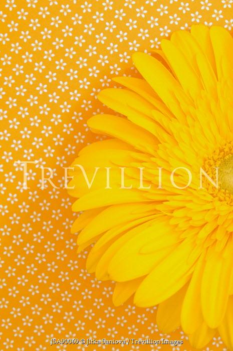 Jitka Saniova YELLOW FLOWER ON YELLOW PATTERN BACKGROUND Flowers