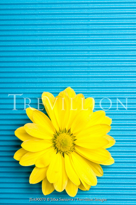 Jitka Saniova YELLOW FLOWER ON BLUE BACKGROUND Flowers