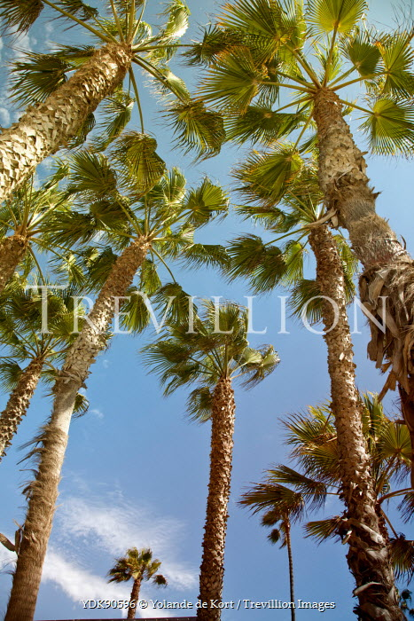 Yolande de Kort PALM TREES WITH BREEZE AND BLUE SKY Trees/Forest