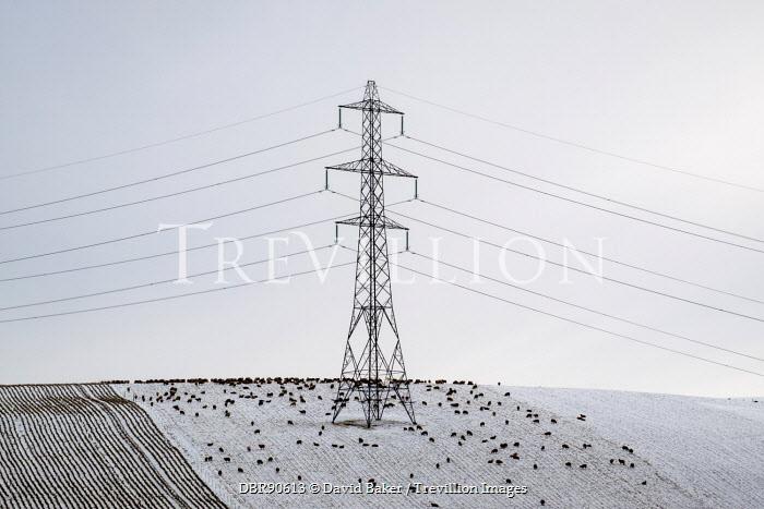 David Baker PYLON IN SNOWY LANDSCAPE WITH BLACK SHEEP Snow/ Ice
