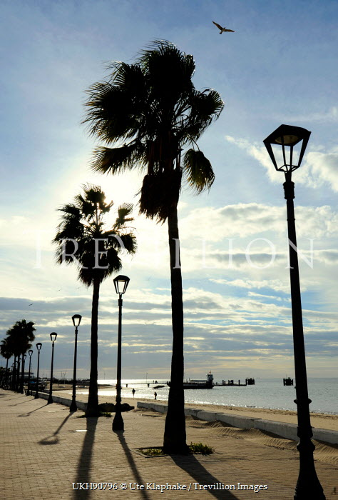 Ute Klaphake SILHOUETTE OF PALM TREES ON BEACH Seascapes/Beaches
