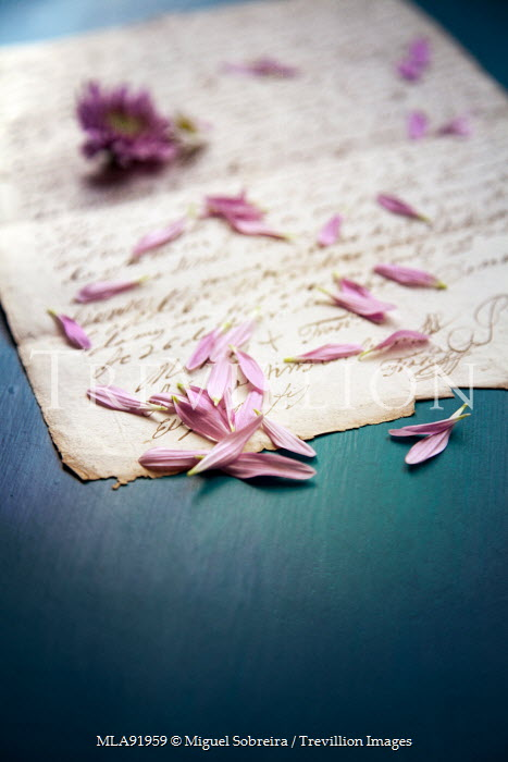 Miguel Sobreira PINK PETALS ON HANDWRITTEN LETTER Miscellaneous Objects