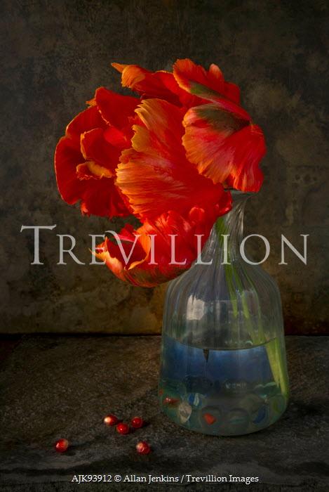 Allan Jenkins ORANGE FLOWER IN GLASS VASE WITH PIPS Flowers