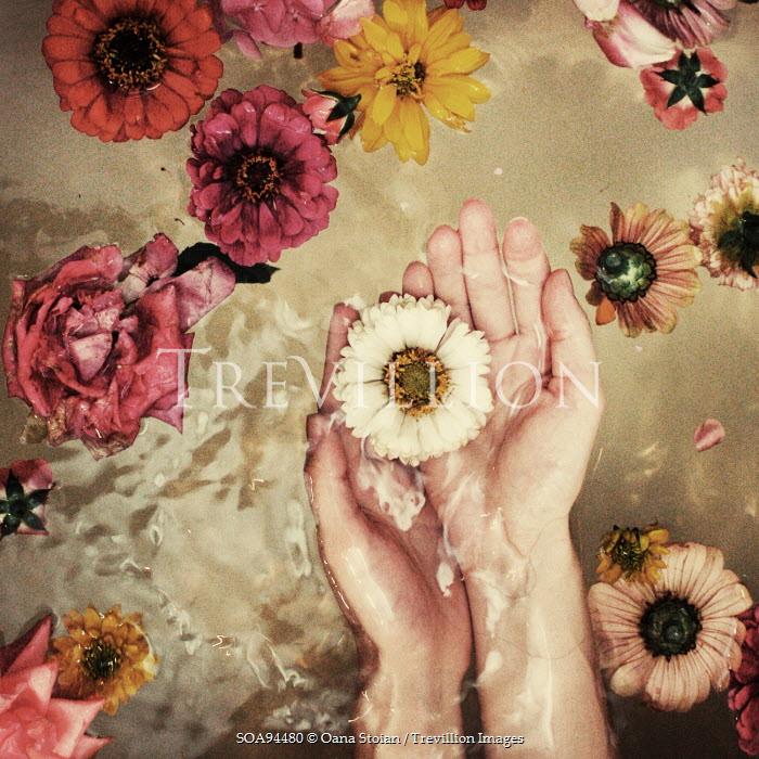 Oana Stoian HANDS HOLDING FLOWER IN WATER Body Detail