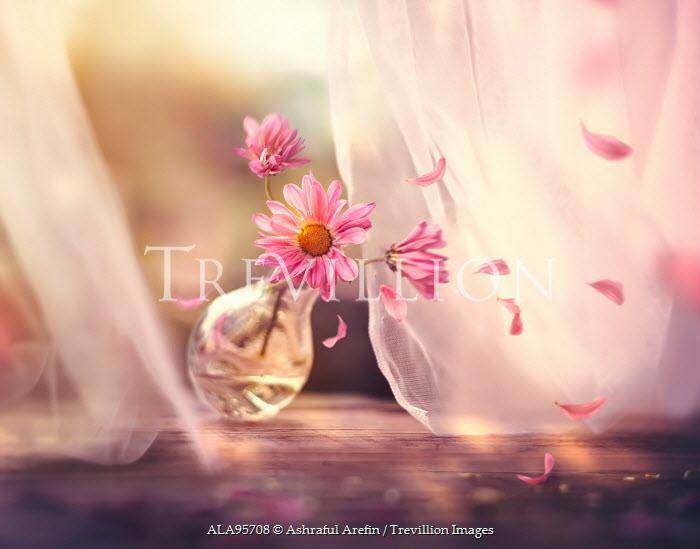 Ashraful Arefin PINK FLOWERS IN JAR FALLING BY WINDOW Flowers