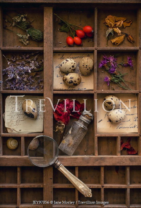Jane Morley BOX WITH EGGS FLOWERS AND MAGNIFYING GLASS Miscellaneous Objects