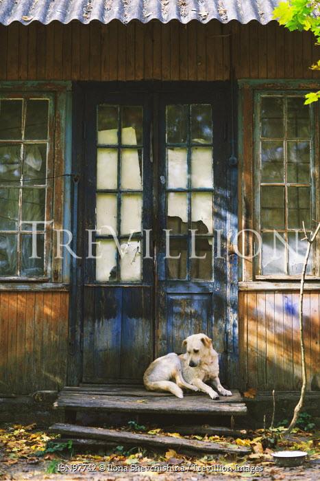 Ilona Shevchishina DOG LYING OUTSIDE OLD WOODEN BUILDING Animals