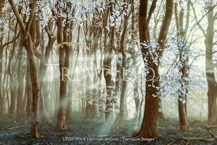 Lars van de Goor TREES WITH BLUE LEAVES Trees/Forest