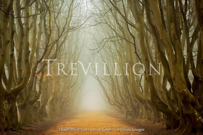 Lars van de Goor TREE LINED PATH Trees/Forest