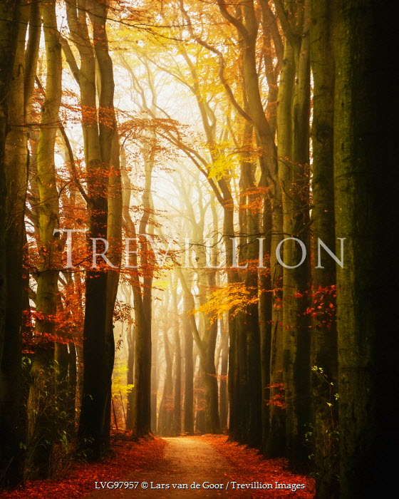 Lars van de Goor TREE LINED PATH Paths/Tracks