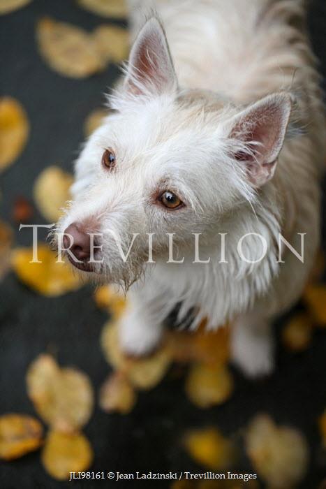 Jean Ladzinski CLOSE UP OF LITTLE WHITE DOG OUTDOORS Animals