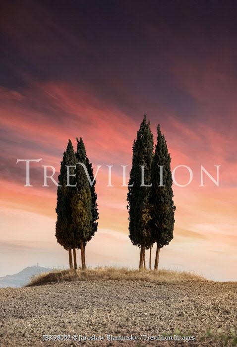 Jaroslaw Blaminsky CYPRESS TREES IN LANDSCAPE AT SUNSET Trees/Forest