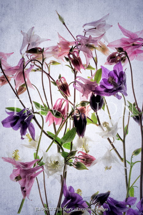Jill Ferry DELICATE PURPLE AND PINK FLOWERS Flowers/Plants