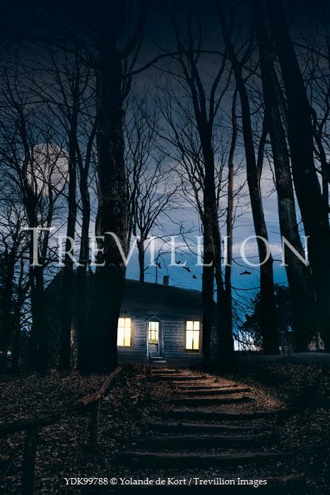 Yolande de Kort LIGHTS GLOWING INSIDE LOG CABIN AT NIGHT Houses