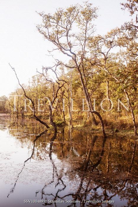 Stanislav Solntsev TREES REFLECTED IN RIVER Lakes/Rivers
