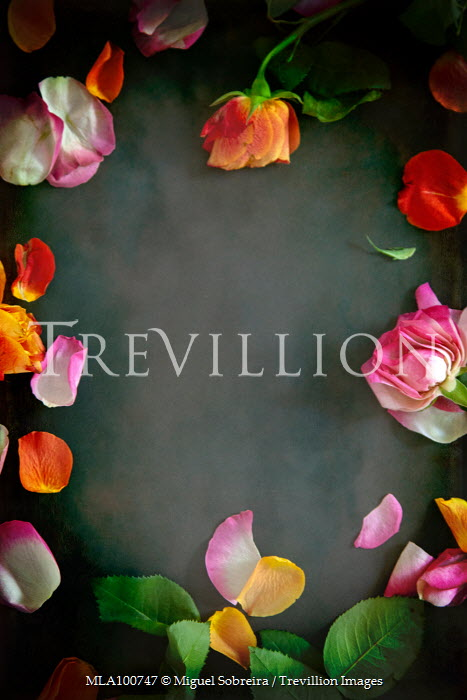 Miguel Sobreira FRAME OF ORANGE AND PINK ROSES Flowers