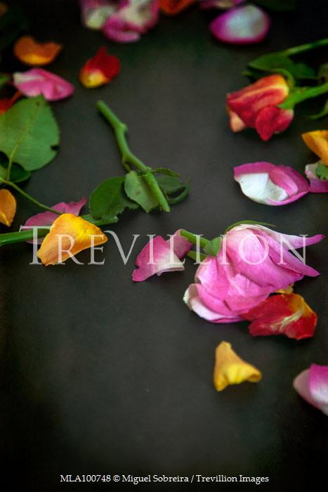 Miguel Sobreira SCATTERED PINK AND ORANGE ROSE PETALS Flowers