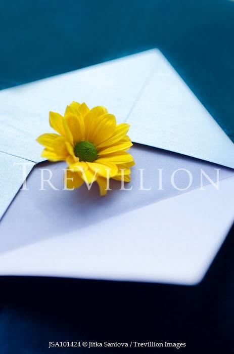 Jitka Saniova YELLOW FLOWER ON WHITE ENVELOPE Flowers