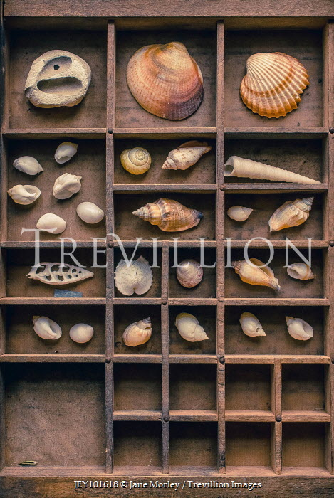 Jane Morley sea shells displayed in wooden cabinet