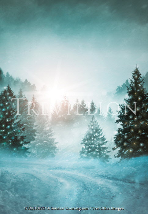 Sandra Cunningham PINE TREES WITH CHRISTMAS LIGHTS Trees/Forest