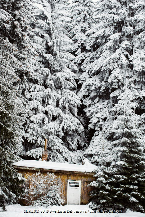 Svetlana Bekyarova CABIN IN SNOW COVERED FOREST Houses