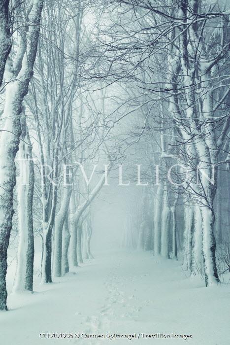 Carmen Spitznagel SNOW COVERED PATH THROUGH TREES Paths/Tracks