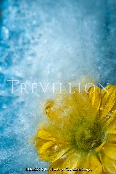 Jitka Saniova YELLOW FLOWER IN WATER Flowers