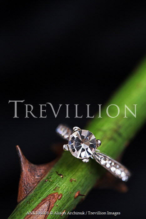 Alison Archinuk Diamond ring on flower stem Miscellaneous Objects