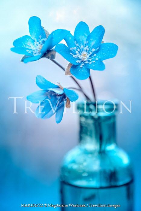 Magdalena Wasiczek BLUE FLOWERS IN GLASS BOTTLE Flowers