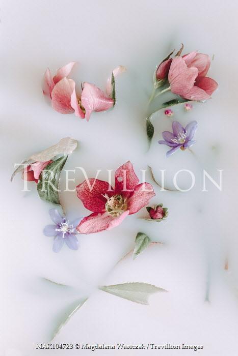 Magdalena Wasiczek PINK AND BLUE FLOWERS IN MILKY WATER Flowers