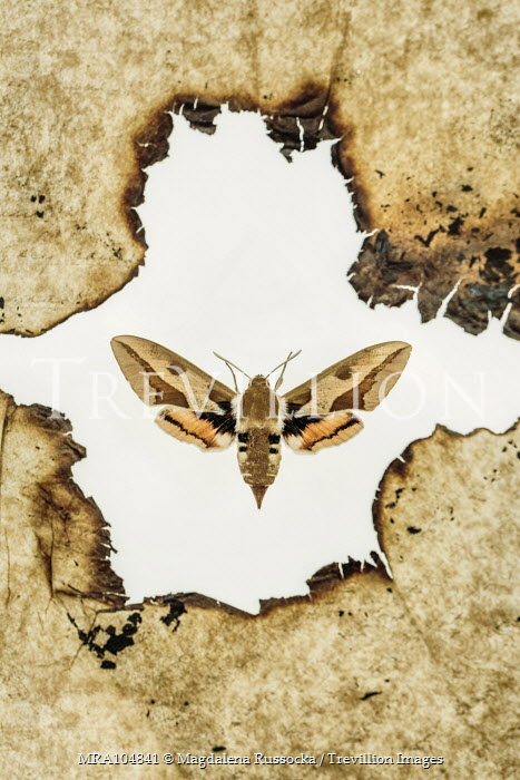 Magdalena Russocka burnt paper and moth from above