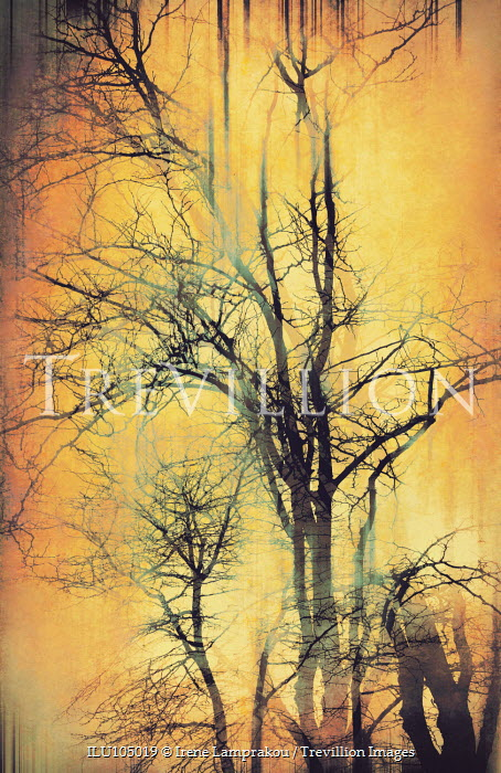 Irene Lamprakou Tree silhouettes on yellow background Trees/Forest