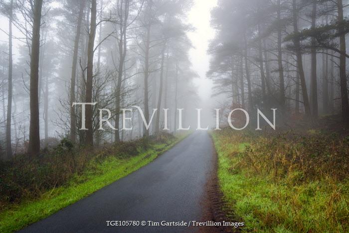 Tim Gartside MISTY COUNTRY LANE Paths/Tracks