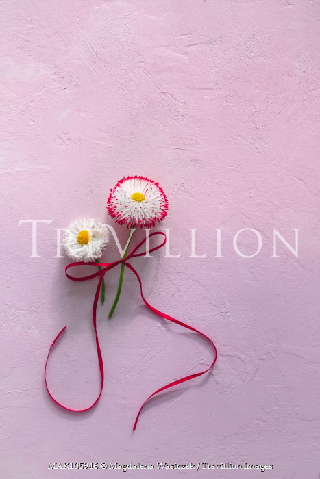 Magdalena Wasiczek TWO FLOWERS TIED WITH RED RIBBON Flowers