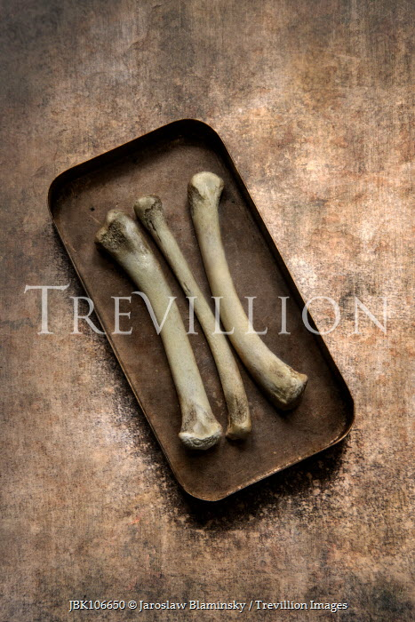 Jaroslaw Blaminsky Metal tray of small bones Miscellaneous Objects