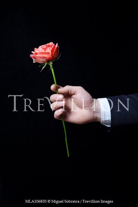 Miguel Sobreira Man Holding Rose Men