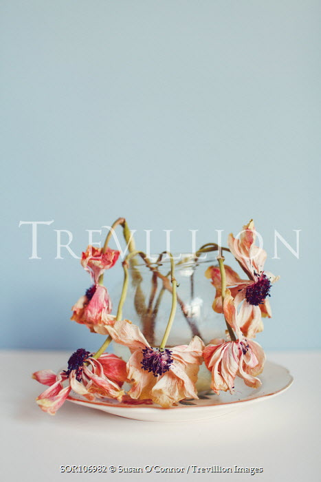 Susan O'Connor DEAD PINK FLOWERS IN JAR Flowers