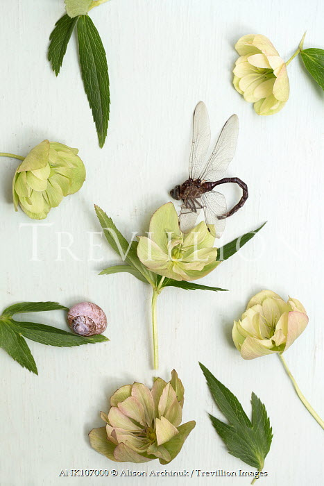 Alison Archinuk DRAGON FLY WITH SNAIL AND FLOWERS Flowers