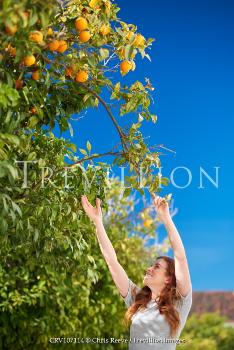 Chris Reeve Woman picking from orange tree Women