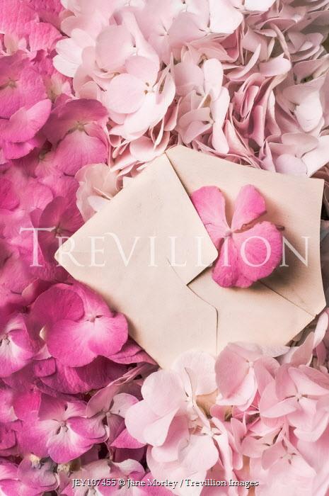Jane Morley OPEN ENVELOPE LYING ON PINK FLOWERS Flowers