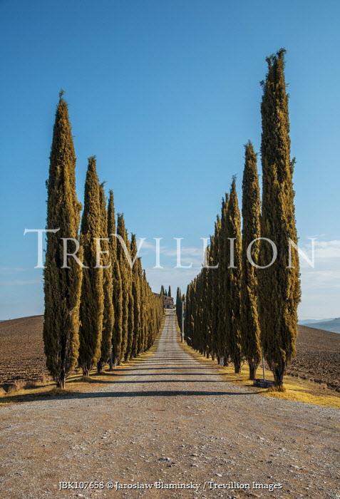 Jaroslaw Blaminsky DRIVEWAY LINED WITH CYPRESS TREES Paths/Tracks