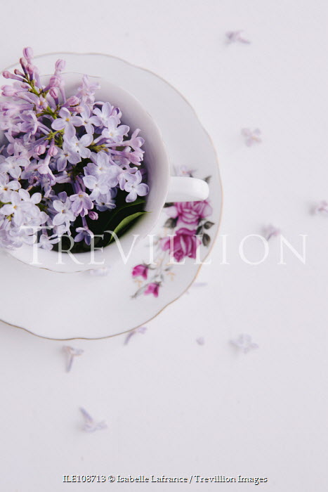 Isabelle Lafrance LILAC FLOWERS IN FLORAL TEACUP Flowers