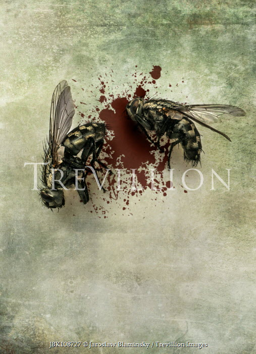Jaroslaw Blaminsky TWO DEAD FLIES WITH BLOODSTAIN Insects