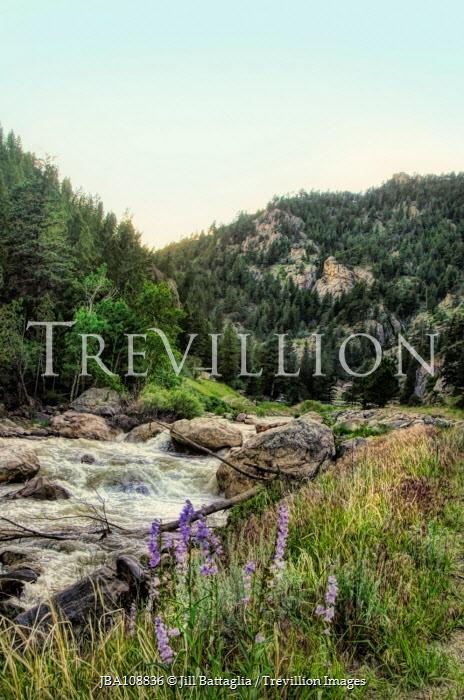 Jill Battaglia Mountain river and wildflowers. Miscellaneous Water