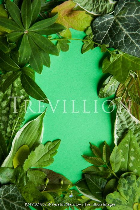 Kerstin Marinov Border of leaves on green background