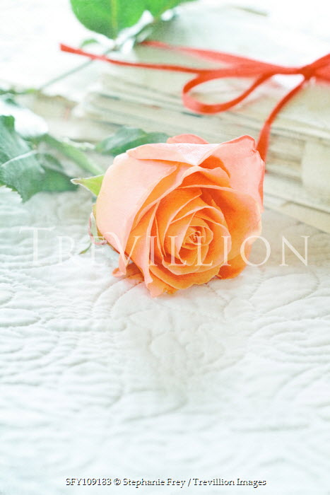Stephanie Frey LETTERS TIED WITH RIBBON WITH ROSE Flowers